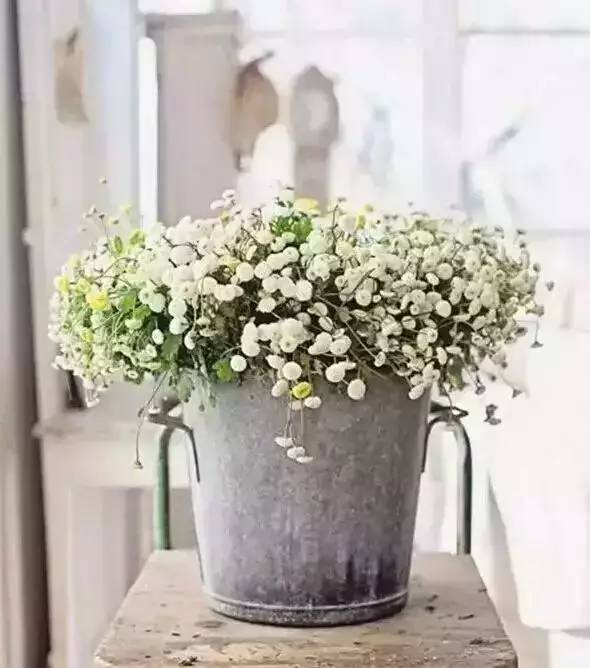 家庭养花中的各种小妙招,赶快看看吧