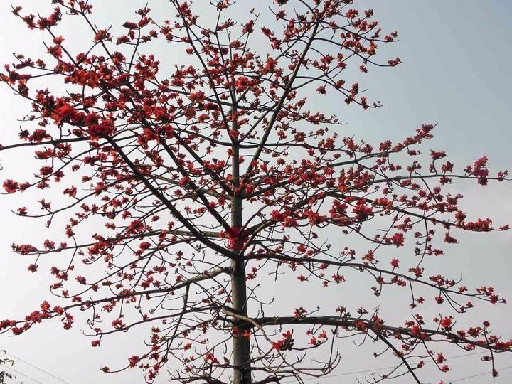 秋水肖红,比背诵 致橡树 更高的撩妹撩哥段位你们知道吗