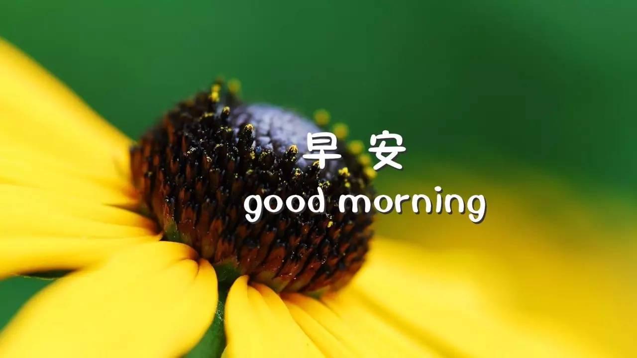 早安图片带字 早安图片唯美励志语录图片