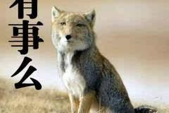 30年,做野生动物的朋友 当代中国野生动物保护摄影第一人 奚志农 分