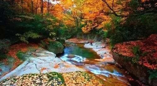 国家aaaa级旅游景区,位于巴中市通江县北部,幅员面积525平方公里.图片