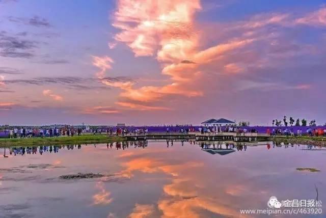 旅游 正文  夏末秋初的金昌紫金苑景區,花開如海,芬芳滿苑,五彩斑斕