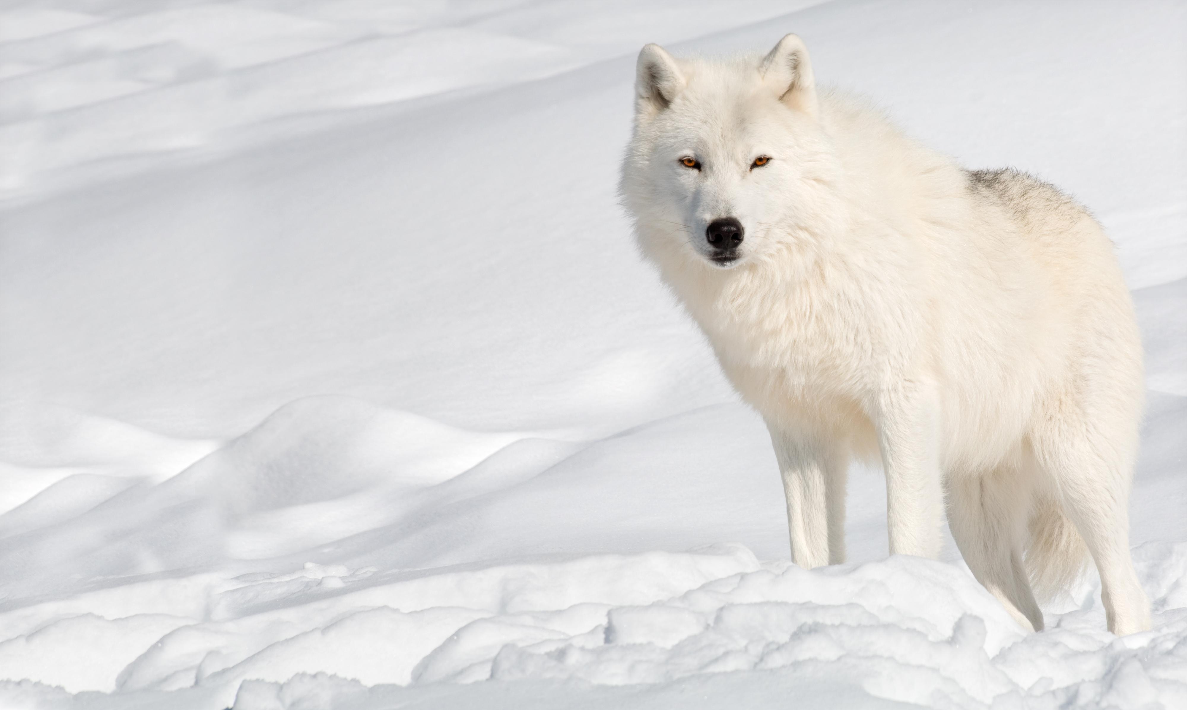 空手套白狼必看的赚钱思维