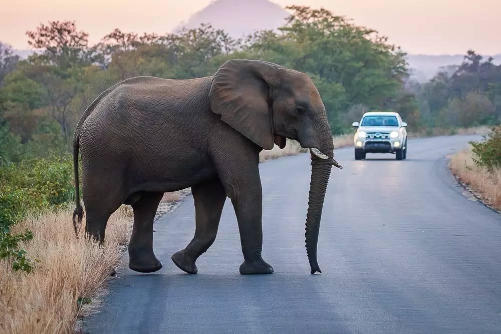 壁纸 大象 动物 1000_667