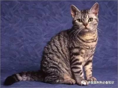 被猫咪抓伤会不会得狂犬病图片