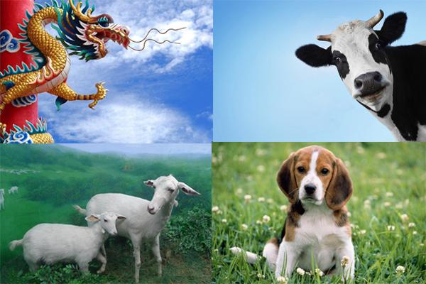 尊贵的十二生肖动物
