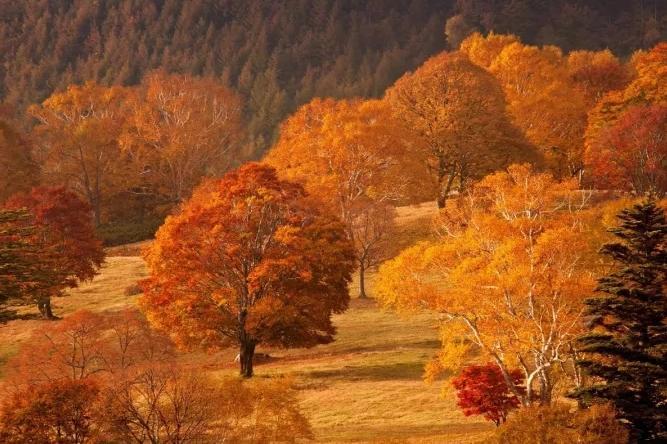落花流水,草木枯荣,浪漫色彩……都是大地的行为艺术