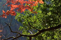千万不要错过,太宰府后院的炫彩秋色!