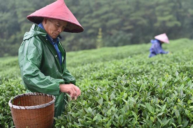 传统茶企业如何转型互联网?看过的老板有福了