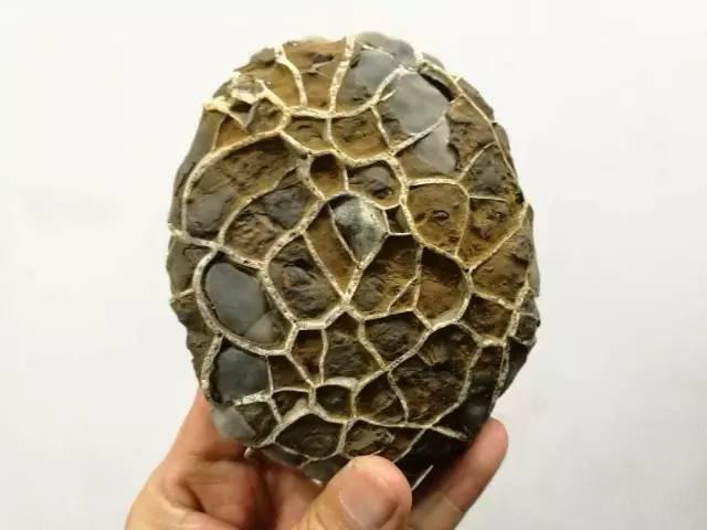 安徽龟纹石质量怎么样?