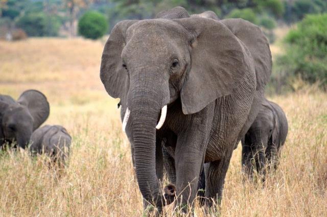 猜图几种动物_猜猜有几种动物大象 生物